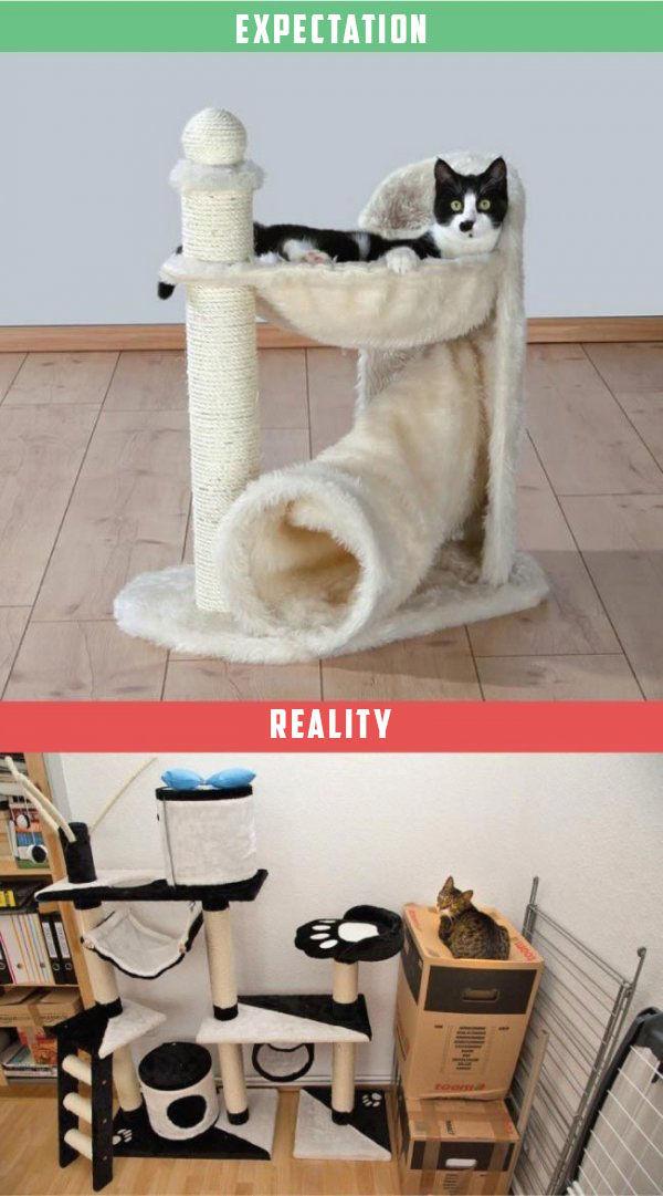 chat-vs-realite-3