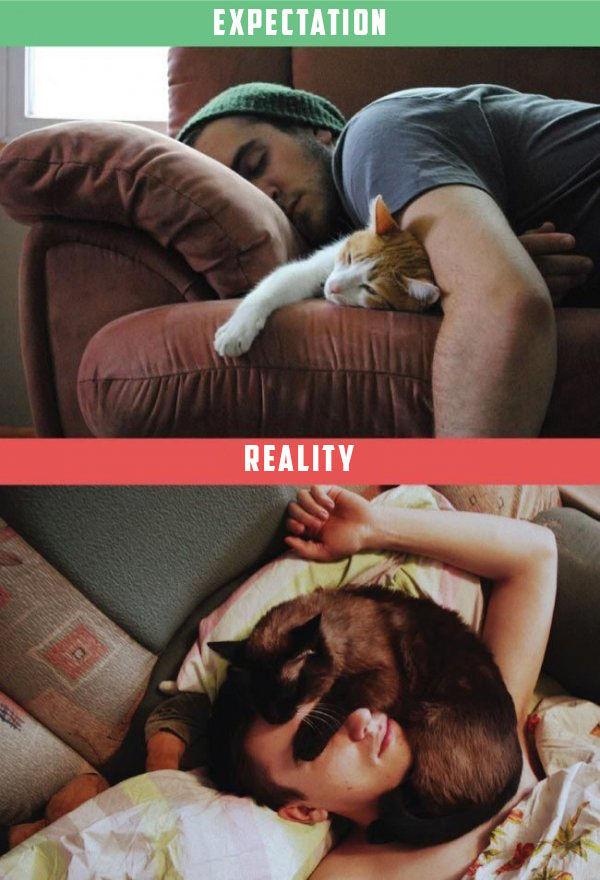 chat-vs-realite-5