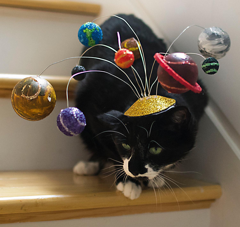 Un chapeau pour chat système solaire | Topito
