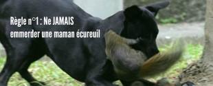 mamananimaux