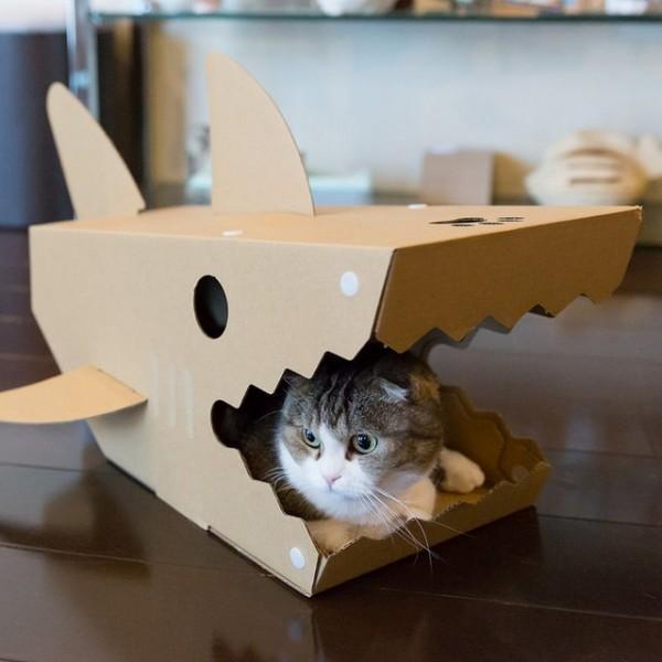 Une maison requin pour chat histoire qu 39 il arr te de vous for Adaptation chat nouvelle maison