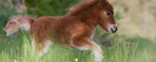 tiny-horses-27__605