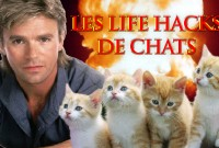 une_life-hask-chats