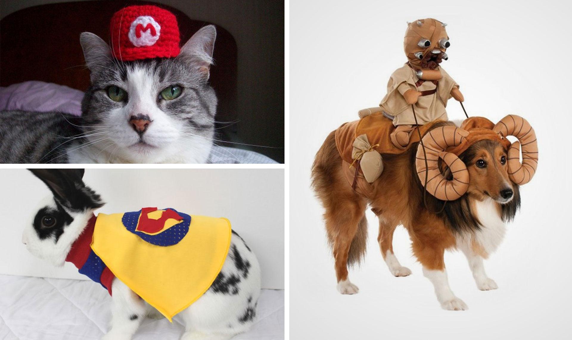top 20 des accessoires geek et originaux pour votre animal. Black Bedroom Furniture Sets. Home Design Ideas