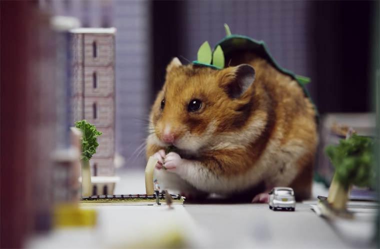 hamster video sexe texte sexe