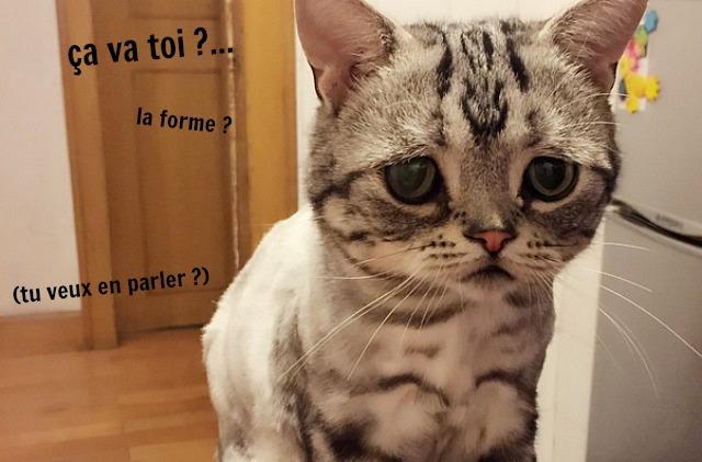 Rencontre et Chat gratuit sur Tchat Francophone avec webcam