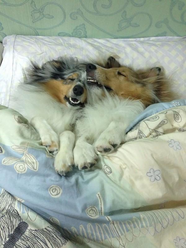 dog-sleeping-bed-funny-1001__605