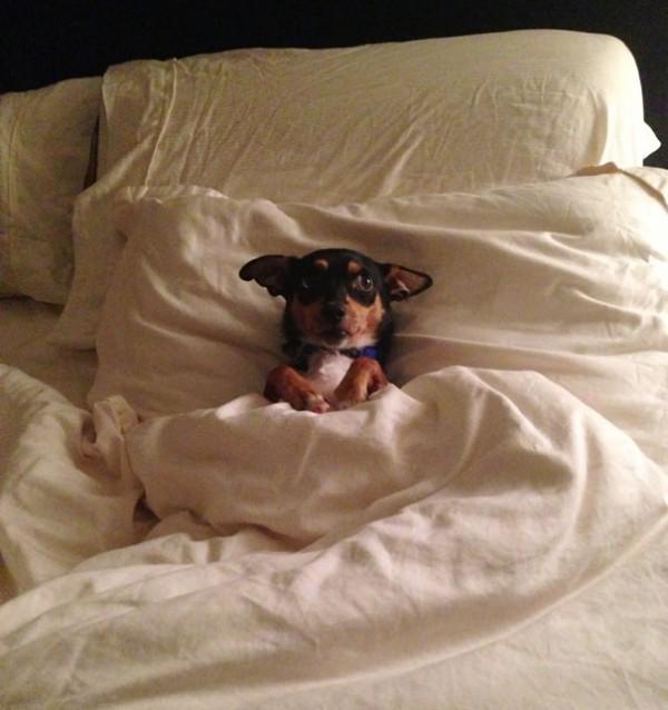 dog-sleeping-bed-funny-7__605