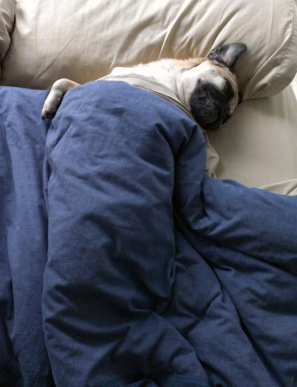 dog-sleeping-bed-funny-8__605