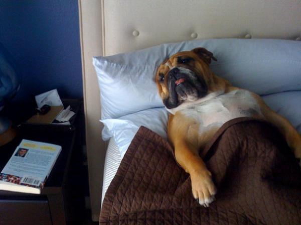dog-sleeping-bed-funny-animal-photos-30__605