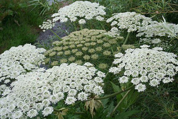 Top 10 des plantes les plus dangereuses quand la nature n for Plante urticante