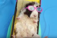 Tiny Hamster s Tiny BBQ  Ep. 8    YouTube