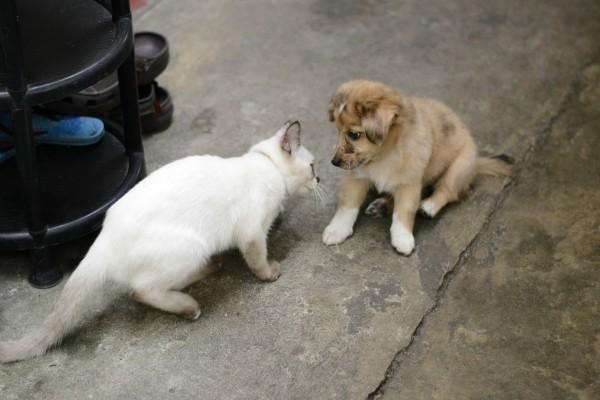 cat bully 2