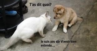 cat bully