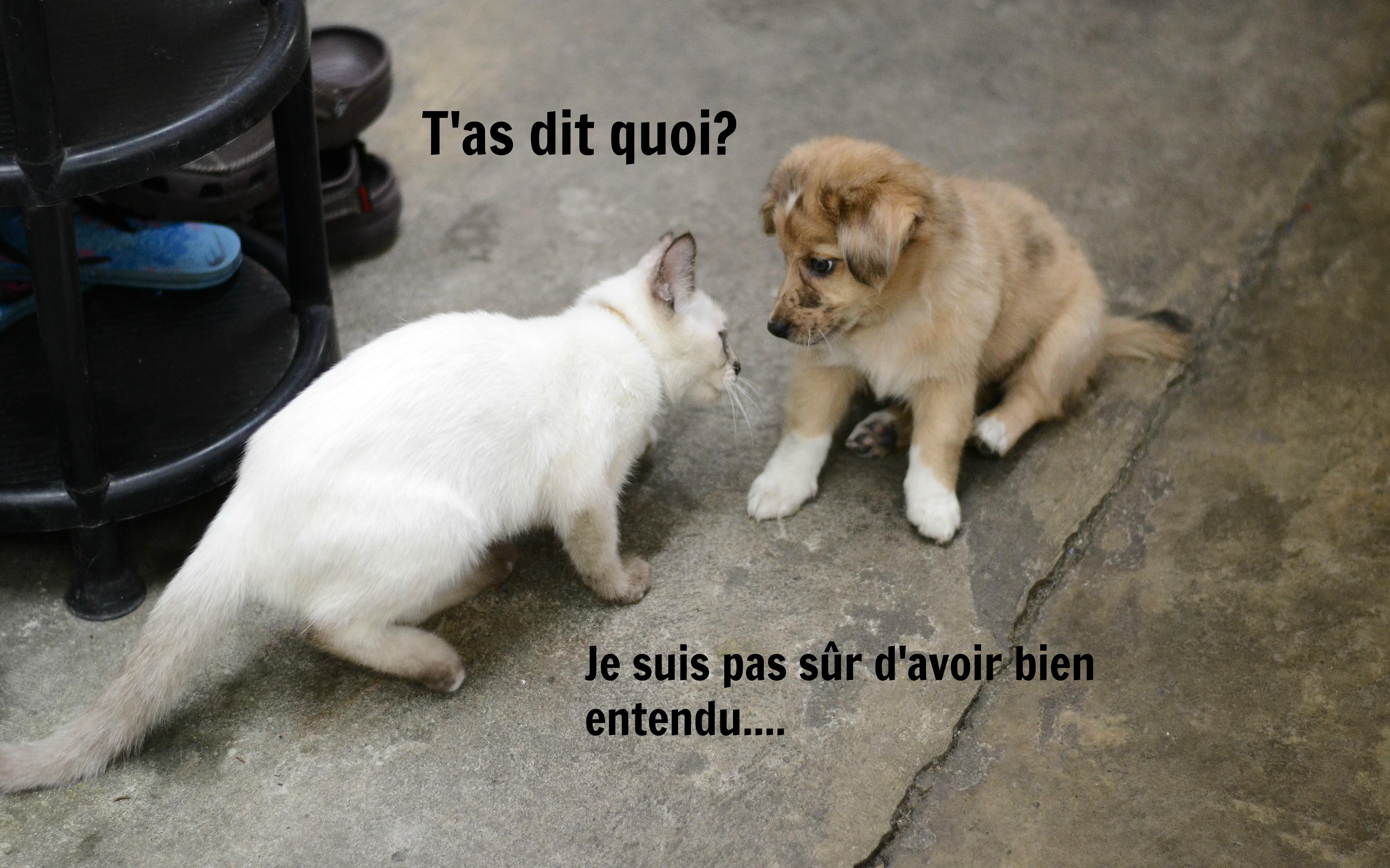 chat francais son inscription Clermont-Ferrand