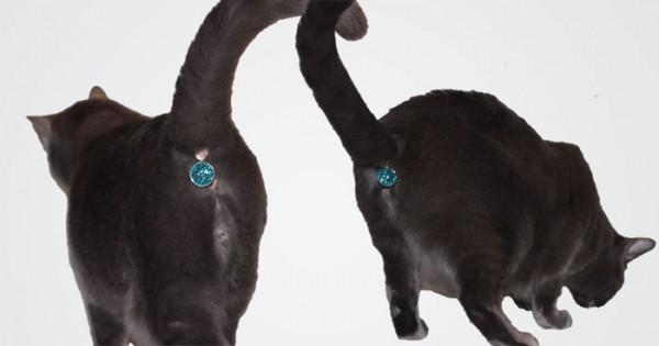 cat-butt