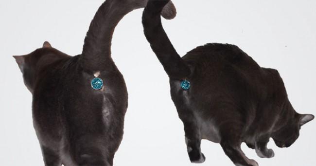 Un cache anus pour chats, le bijou ultime