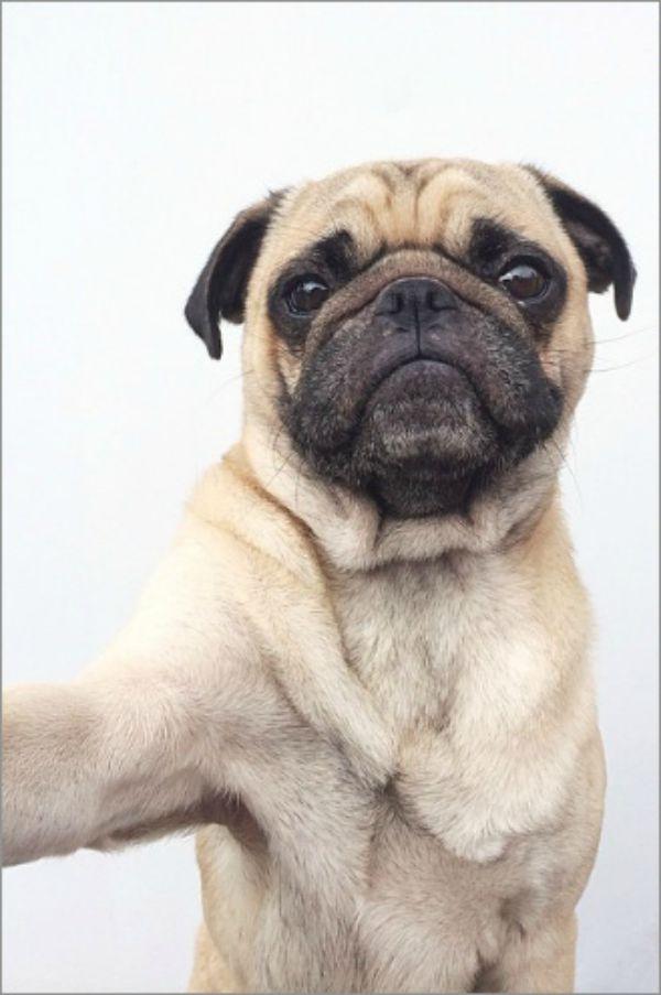 dog-selfie10 (1)