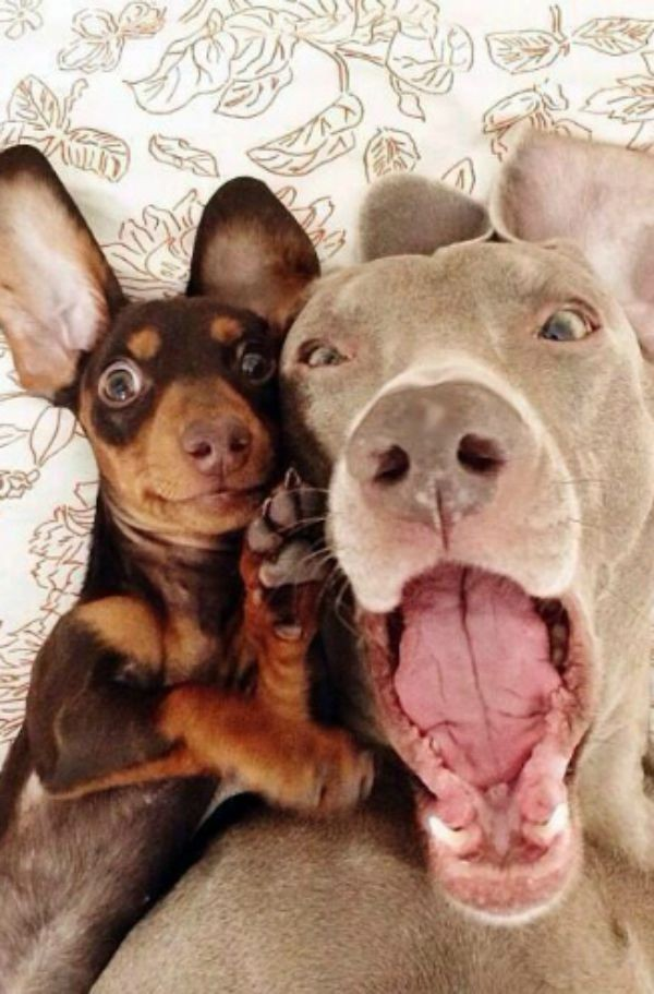 dog-selfie6