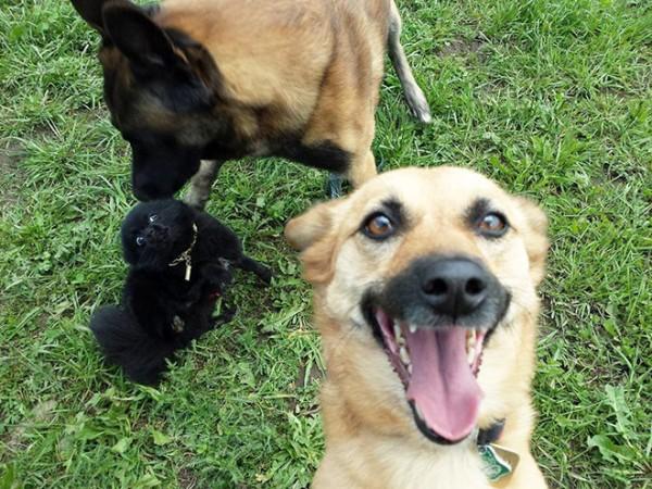 dog-selfie7