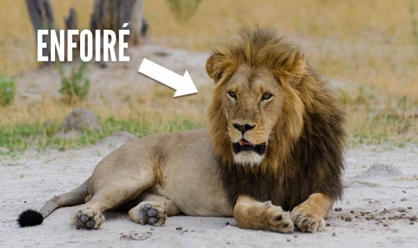 une-lion-2
