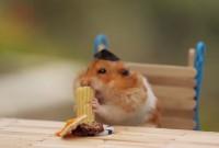 une_hamster