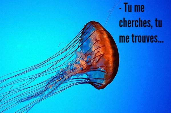 couv meduse