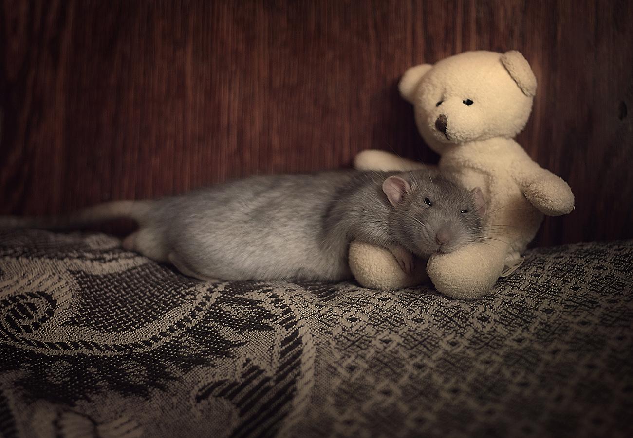 doudou-rat1