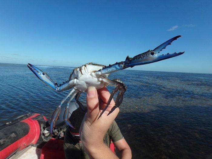 photoshop-battle-crabe-1