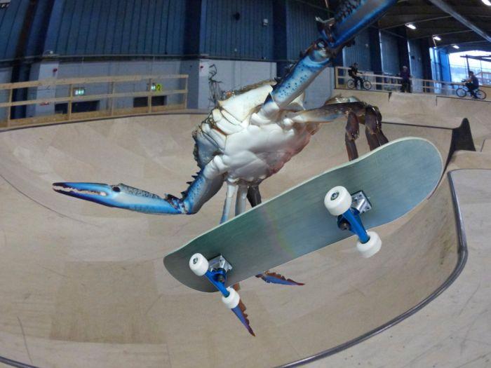photoshop-battle-crabe-10