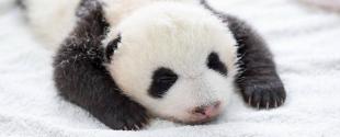 une-panda