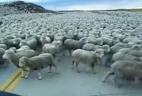 une_mouton