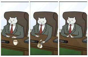 cat coffe