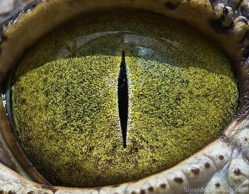 oeil-animaux-suren-mavelyan-12