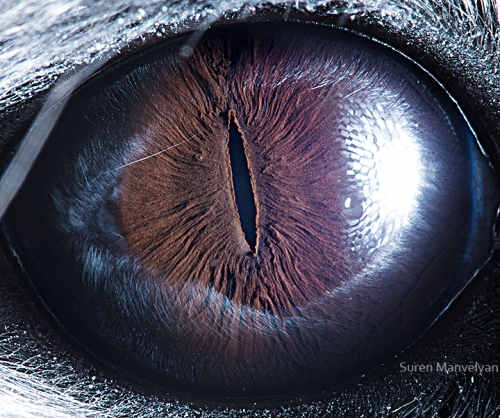 oeil-animaux-suren-mavelyan-3