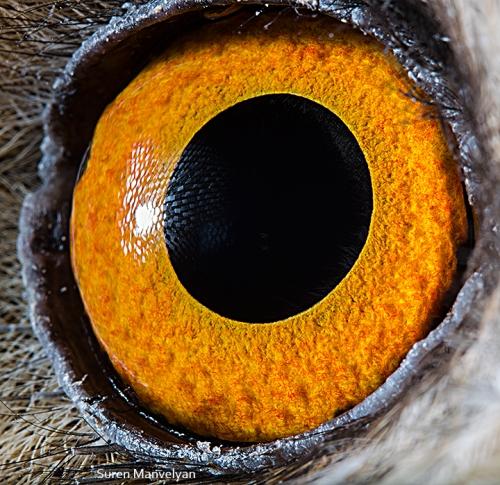 oeil-animaux-suren-mavelyan-4