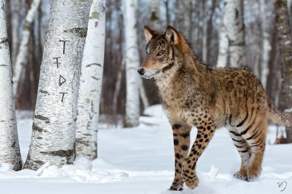 sarah-deremer-hybride-animaux-12