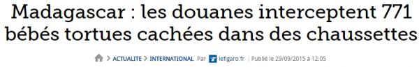 Madagascar   les douanes interceptent 771 bébés tortues cachées dans des chaussettes