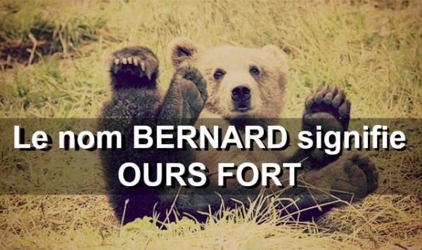 brown-bear-529096_640