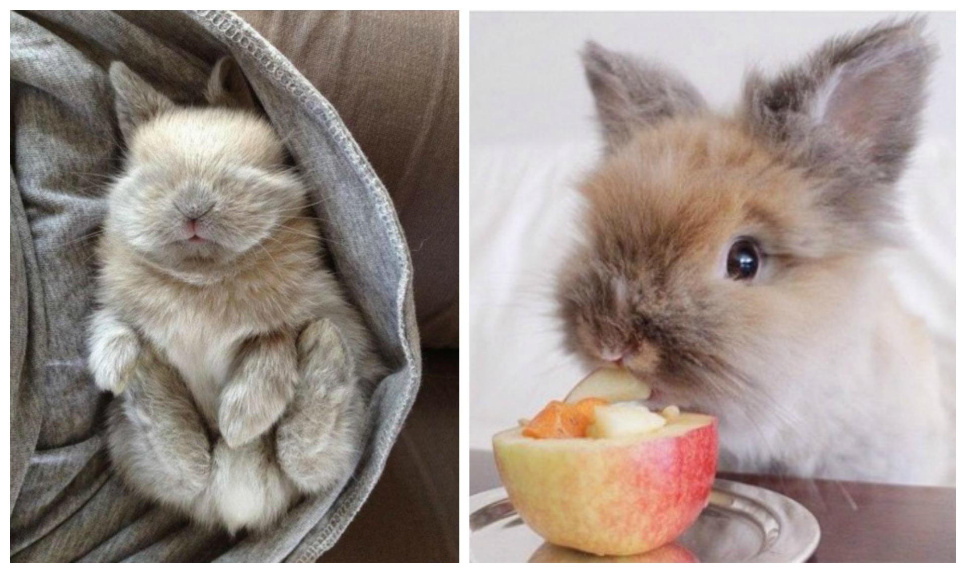 Top 20 des lapins les plus mignons de l 39 histoire les - Photo de lapin mignon ...
