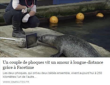 phoques