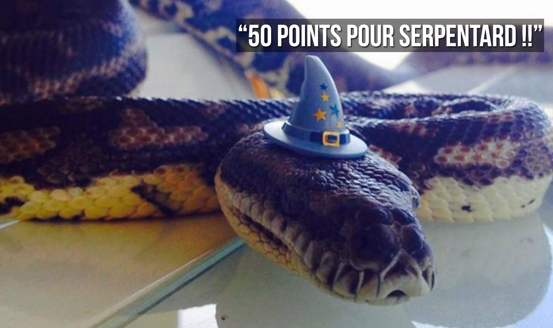 Top 10 Des Plus Gros Serpents Du Monde Ceux Qui Font Bien Flipper