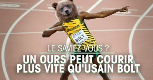 une-ours-fb
