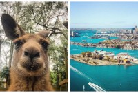 Top 9 des activités originales à faire à Sydney, on prend son billet pour l'Australie et fissa