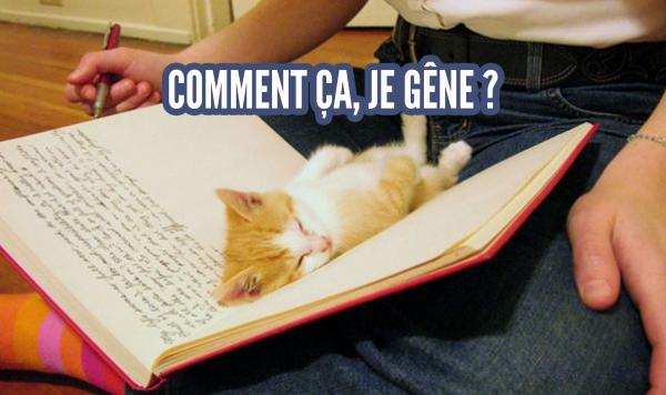 une_chat