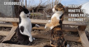 Catch_cats_3