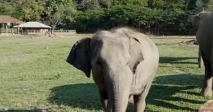 UNE_elephant