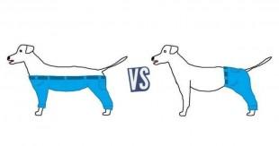 une_chien
