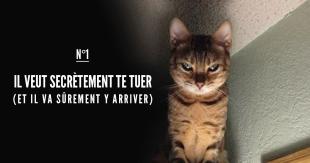 une_etudes_chats