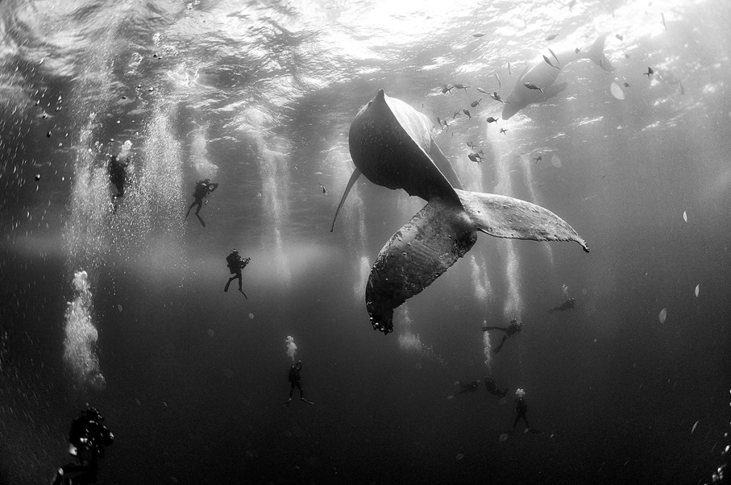 © Anuar Patjane Floriuk - Whale Whisperers - FB Insta
